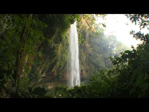 🎧 Waterfall & Jungle Sounds - Relaxing Tropical Rainforest Nature Sound ( Singing Birds Ambience )