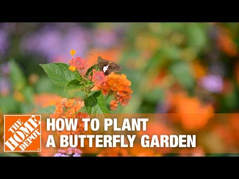 How To Build a Butterfly Garden - The Home Depot