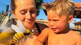 Download WE MET A BEE! 🐝 Video
