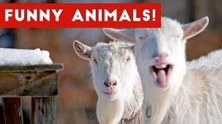 Funniest Animal Clips, Outtakes & Bloopers of December 2016 Weekly Compilation | Funny Pet Videos