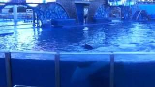 Shamu Got Us Good At SeaWorld