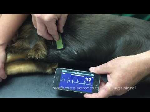 Home monitoring of heart failure in dogs - Heart rate (HR) at rest