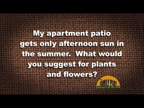 Q&A – What plants can I grow on my apartment patio? It only gets afternoon sun.