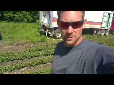 Spraying soybeans/corn update/Roundup resistant weeds