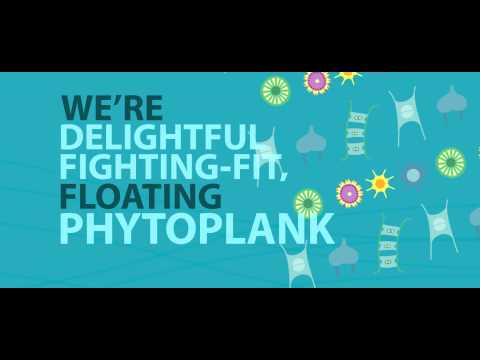 Ozone song: fighting-fit phytoplankton