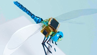 11 Technologies Inspired by Animals
