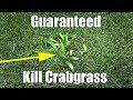 Safely Kill Crabgrass in Bermuda Lawn