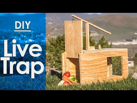 Live Trap, How to make a - simple DIY