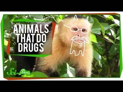Animals That Do Drugs