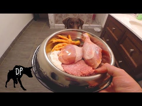 Raw fed Doberman | Chicken, Kefir, and Ground Pork