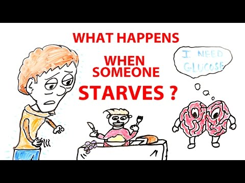 What happens to the body and brain when someone starves?