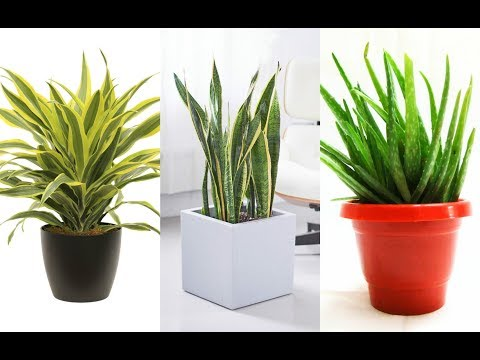 10 Indoor Plants That You Can Grow in Your House Right Now!