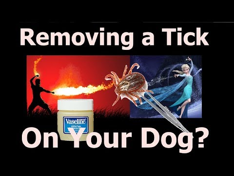 How to Remove a Tick from a Dog (safest way)