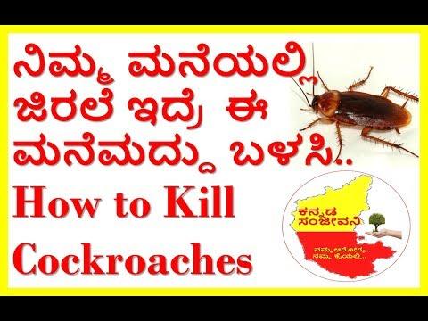 How to Kill Cockroaches Naturally...Kannada Sanjeevani