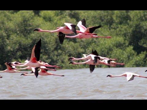 Flamingos in Mumbai...!!!!
