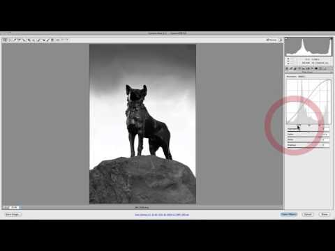 Camera Raw: How To Use The Parametric & Point Curves