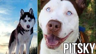 10 Incredible Mixed Breed Dogs