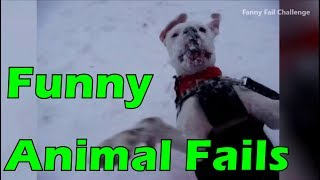 ➤ Fail Compilation Animals Videos 2017 HD NEW #14 Germany, Russia, USA   Funny Fail Challenge
