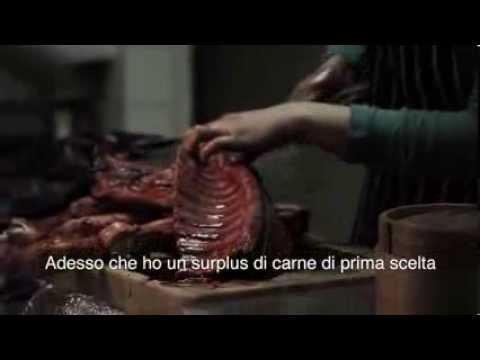 Spring Rolls ITALIAN sub