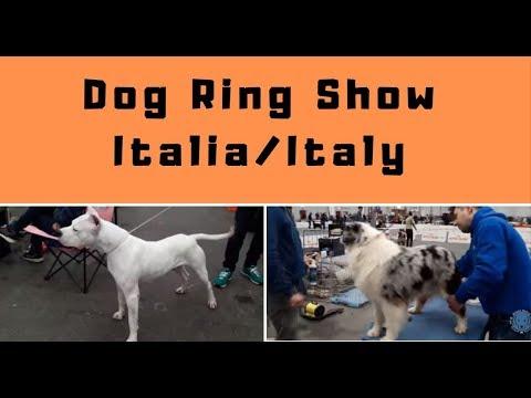 Part 6 - Dog Show Italy/Italia -Bhola Shola
