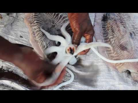 How to Cook The Giant Squid - KADAL Tv