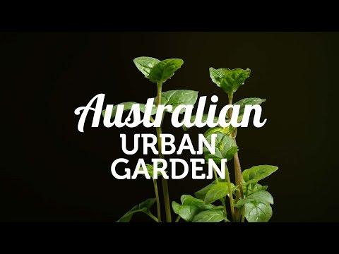 The New Australian Urban Garden