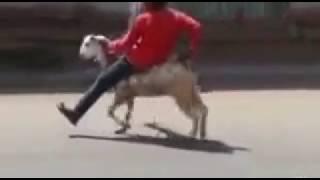 OMG Funny whatapp video