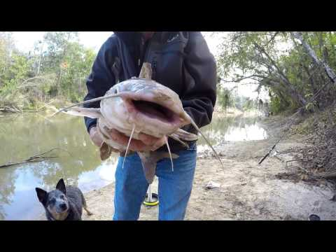Bank Fishing for Big Blue Catfish - How To Catch Big Catfish From The Bank