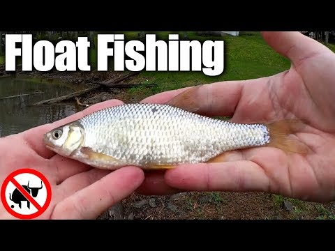 Float Fishing with Worms in Spring - Catching 4 Different Species