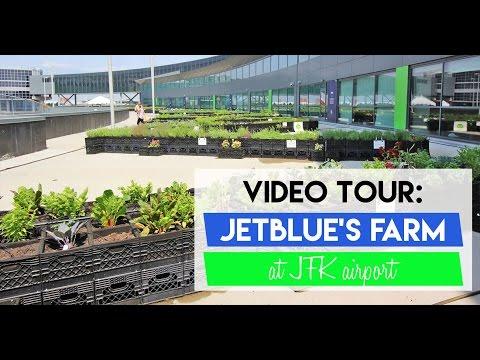 A Tour of JetBlue's Farm at JFK Airport (Facebook Live Video)