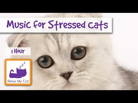 1 Hour of Cat Music for Stressed Cats and Kittens 🐱 #STRESS09