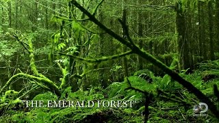 The Emerald Forest   Unearthed