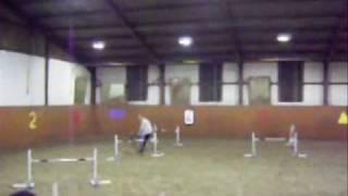 fast and furious dog agility