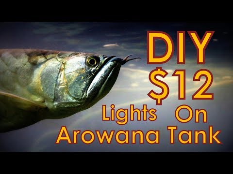 HOW TO: CHEAP and EASY LED aquarium light - SUPER CHARGED - Arowana Tank