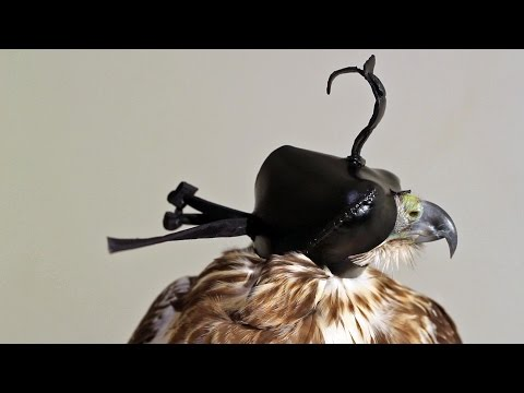 How to Make the Gerrish 3-4-5 Falconry Hood