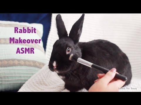 Rabbit Gets a Makeover | ASMR / RELAXING