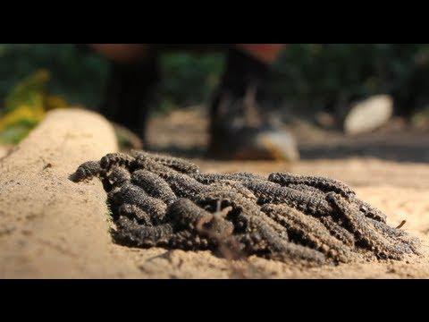 STRANGE but GENIUS Caterpillar Speed Trick - Smarter Every Day 93