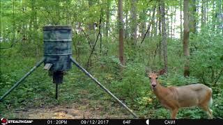 September 2017 Ohio Deer Cam