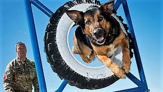 11 Amazing Armed Forces Animals