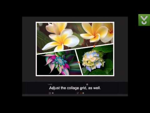 Moldiv - Make amazing collages - Download Video Previews