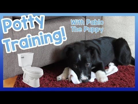 How to Potty Train Your Puppy! 5 Top Tips on How to Easily Toilet Train Your New Puppy!