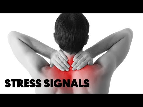6 Signals Our Body Sends to Tell Us We Are Too Stressed