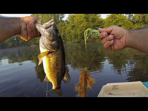 POND BASS FISHING (MIDWEST ROAD TRIP) TOPWATER FROG!