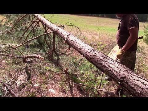 Limbing Logs Flush for Cabin Walls