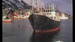 Sørvågen havn   båt på bunnen   båt trekt av grunn 1986