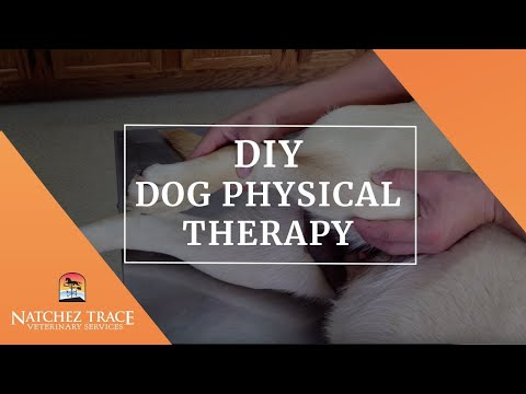 DIY Dog Physical Therapy - ACL, CCL, Cruciate, Knee Ligament - Post Surgery