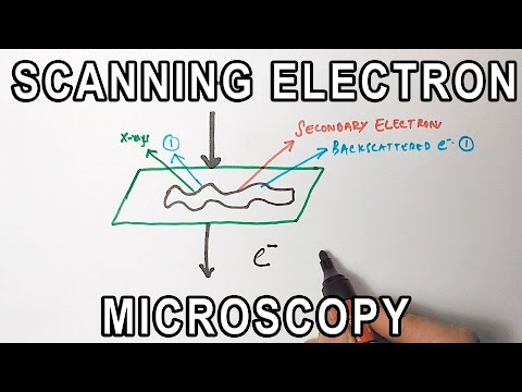 Principle of Scanning Electron Microscopy | SEM