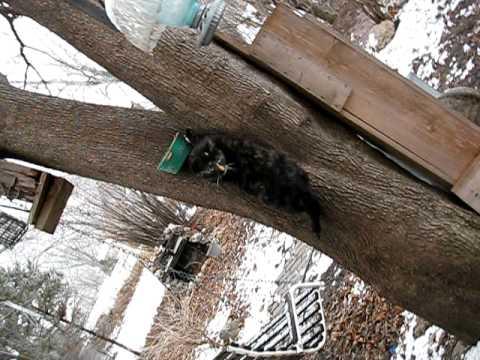 Cats attack bird feeders