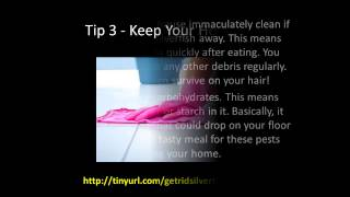 How To Get Rid Of Silverfish 5 Easy Tips