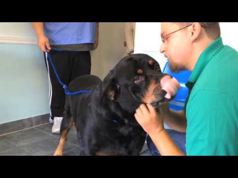 Miami man reunited with his missing dog after 8 years